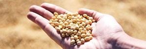 集中力・記憶力を上げる食材・大豆
